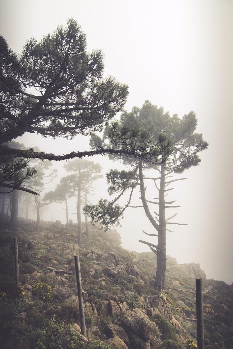 foggy day - agoraphobia, natxodiego - natxodiego   ello