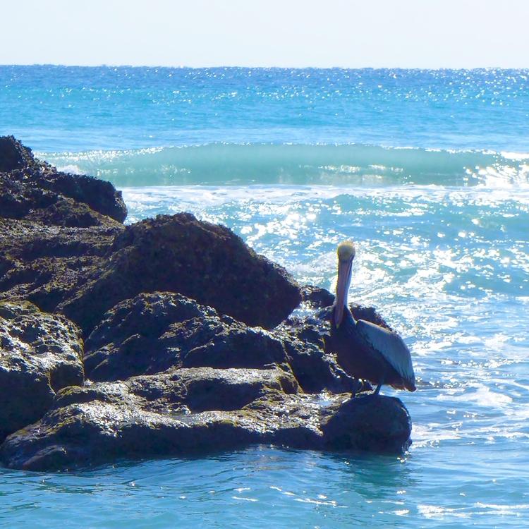 Neptune - dalespiry | ello