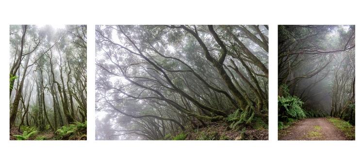 Hiking fog - el Cedro, La Gomer - konradphoto | ello