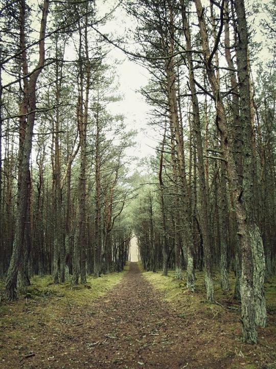 gretaberlin, forest, nature, landscape - gretaberlin | ello