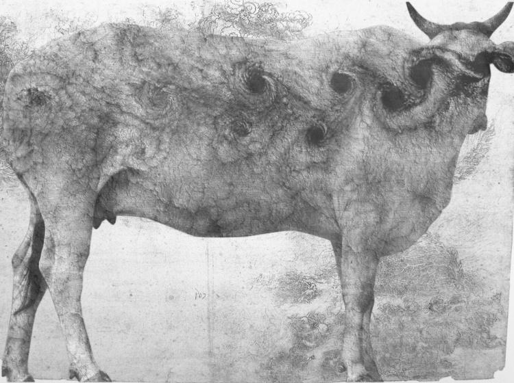 Holy Cow - vladasorze | ello