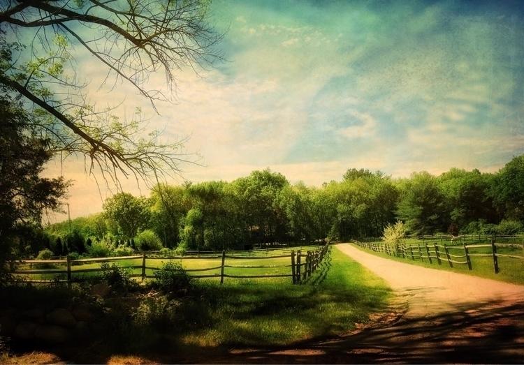 Morning Walk - ellotextures - diane-images | ello