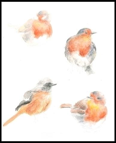 American robin Printing Waterco - mwchau | ello