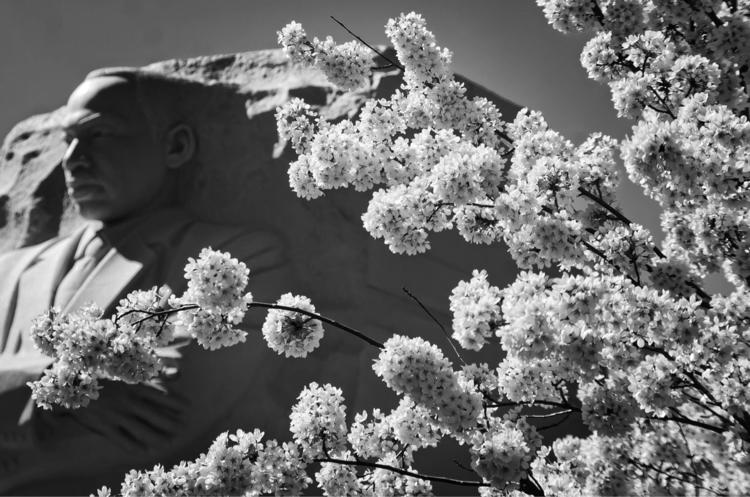 Cherry tree bloom Martin Luther - nikonkenny | ello