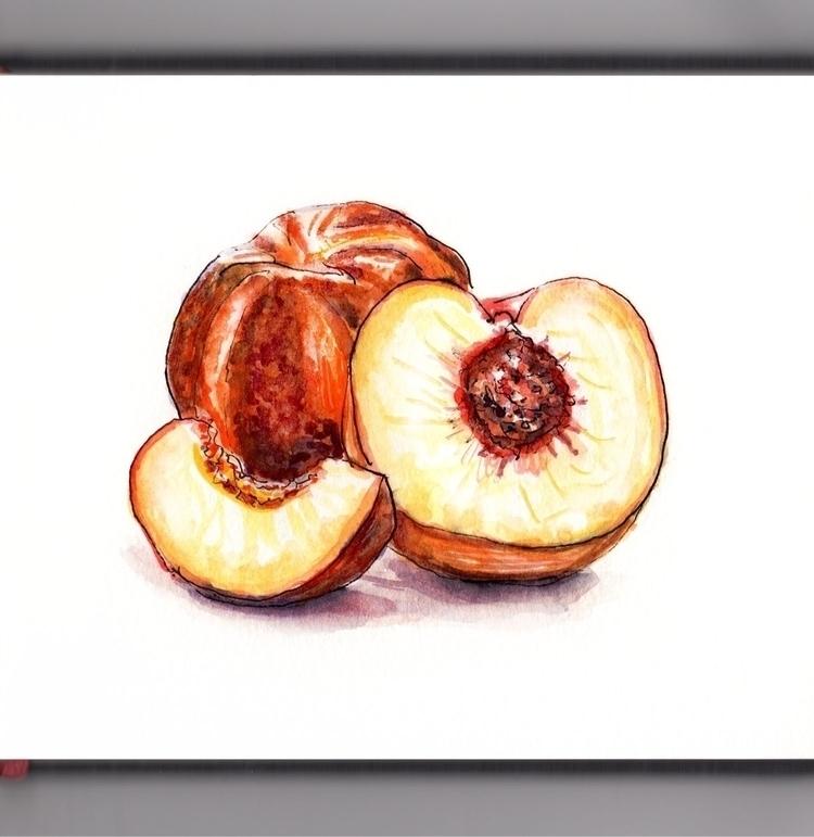 Peachy - watercolor, watercolour - doodlewash | ello