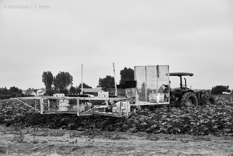 Agricultural break. Santa Ynez  - tychobrown | ello