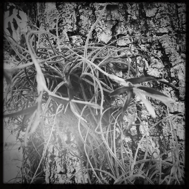 Air Plant Hanging Tree Apps - mikefl99 - mikefl99 | ello