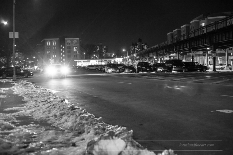 Bronx York City), USA. 13 Febru - wlotus | ello