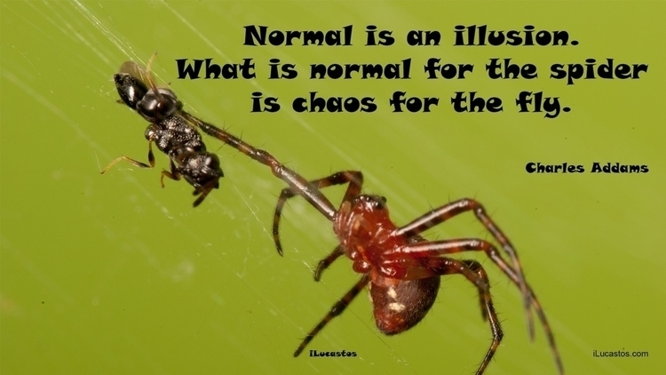 Normal illusion. normal spider  - ilucastos | ello