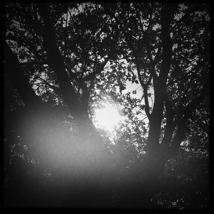 Morning Sun Peeking Tree Work A - mikefl99 | ello