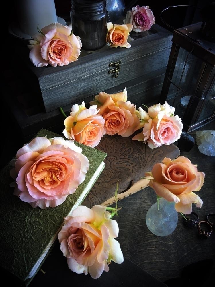 fresh roses garden, brought stu - queryeve | ello