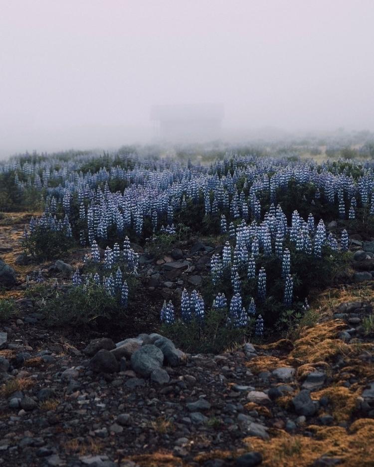 Iceland Fog | June 2016 - iceland - toriamia | ello