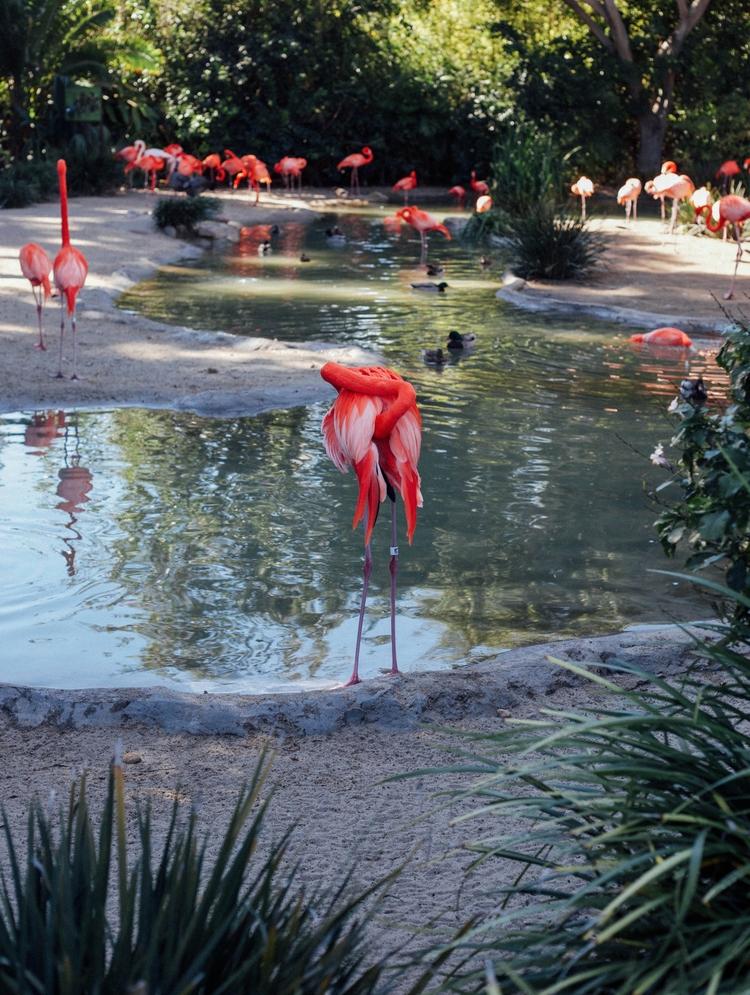 tfw shy flamingle - nature, animals - toriamia | ello