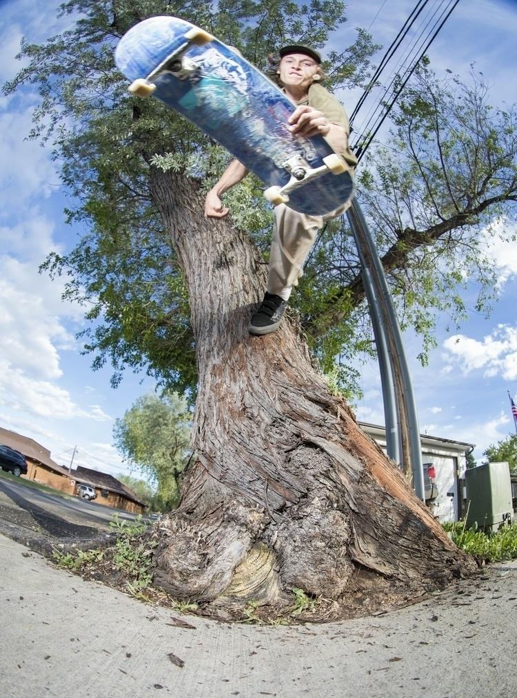 Max Hofert tree slob plant, Bou - philmckenzie   ello