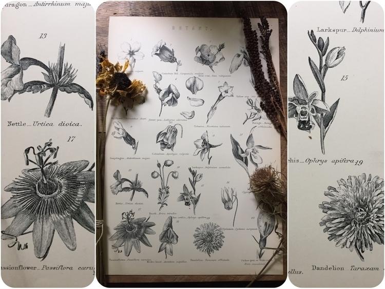 120+ botany illustration plate  - bellsandthistles | ello