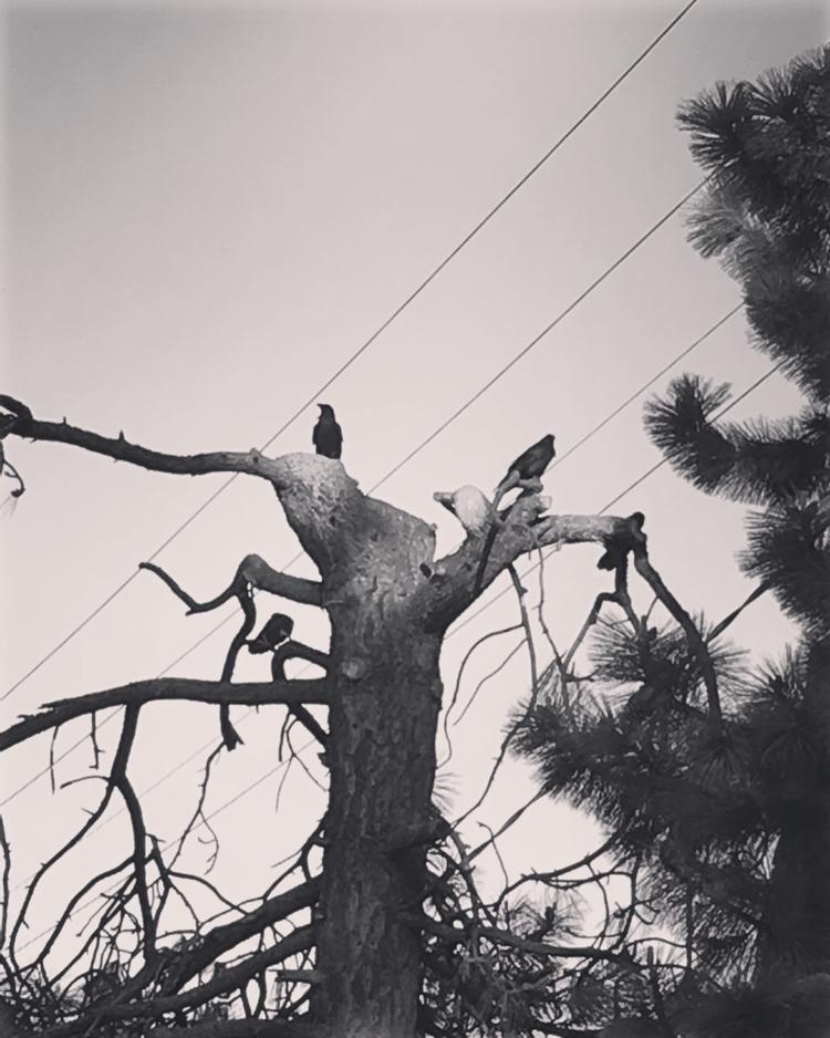 blackmetal, bnw, crows - anubisisdead | ello