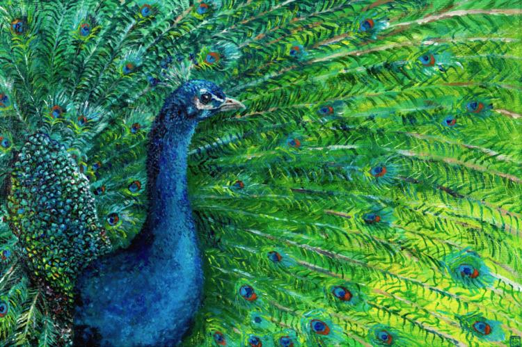 Peacock - Acrylic canvas board  - malthus_wolf | ello