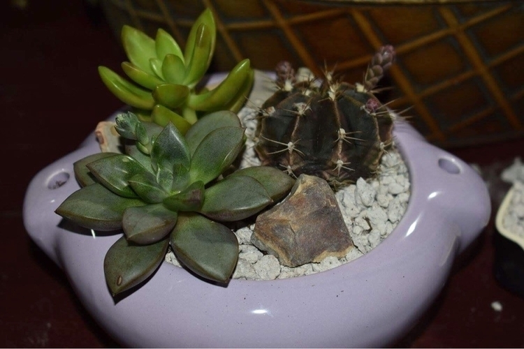 purple potting put $20 <3 fa - succsbyles | ello