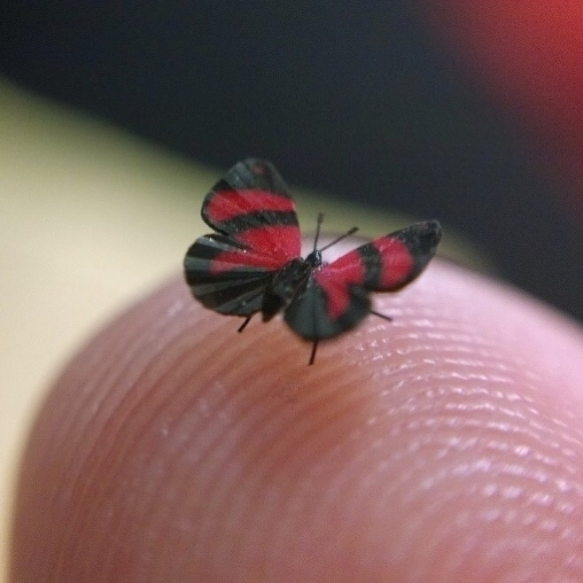 crushing butterflies Adore Mini - thebutterflybabe | ello