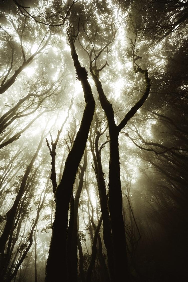 jungle lost, moments eyes feel - lavisuals | ello