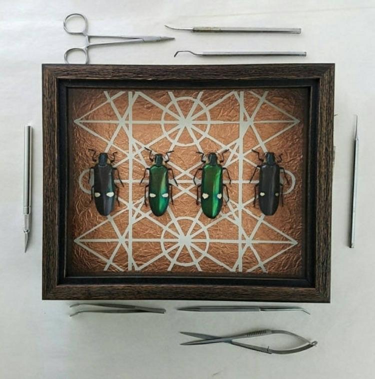Metallic wood-boring beetles hi - newdeathdisco | ello