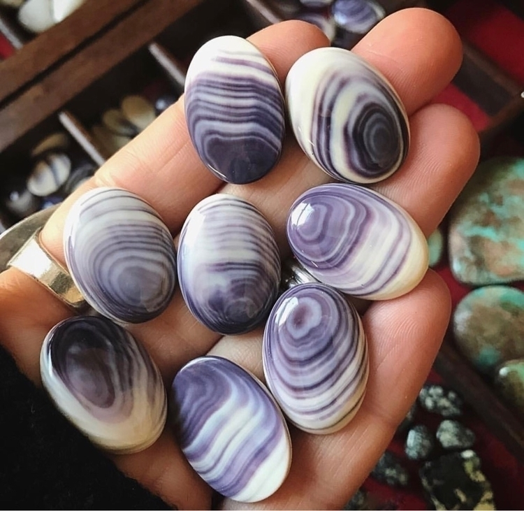 Wampum ~ Quahog Clam Shells Eng - silverravenstudio | ello