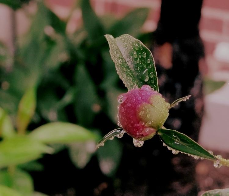 Peony Rain: Late Spring, NYC 20 - leeyee | ello