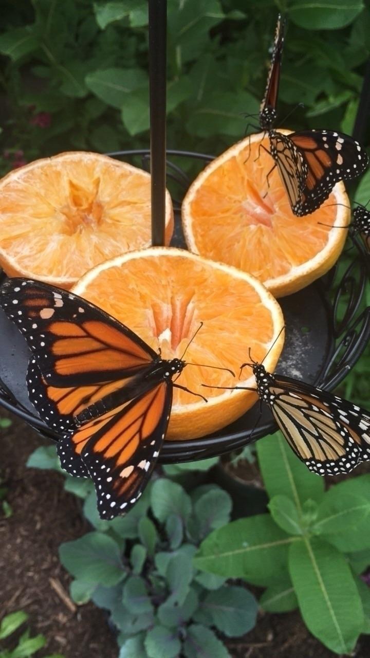 knew loved oranges time capture - thatgirlstayce   ello