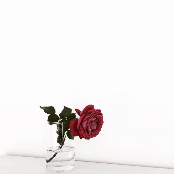 rose, bloom, red - dixnx | ello