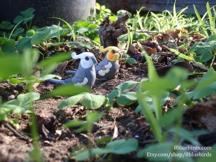 love creations nature - cockatiel - 8bluebirds_studio   ello