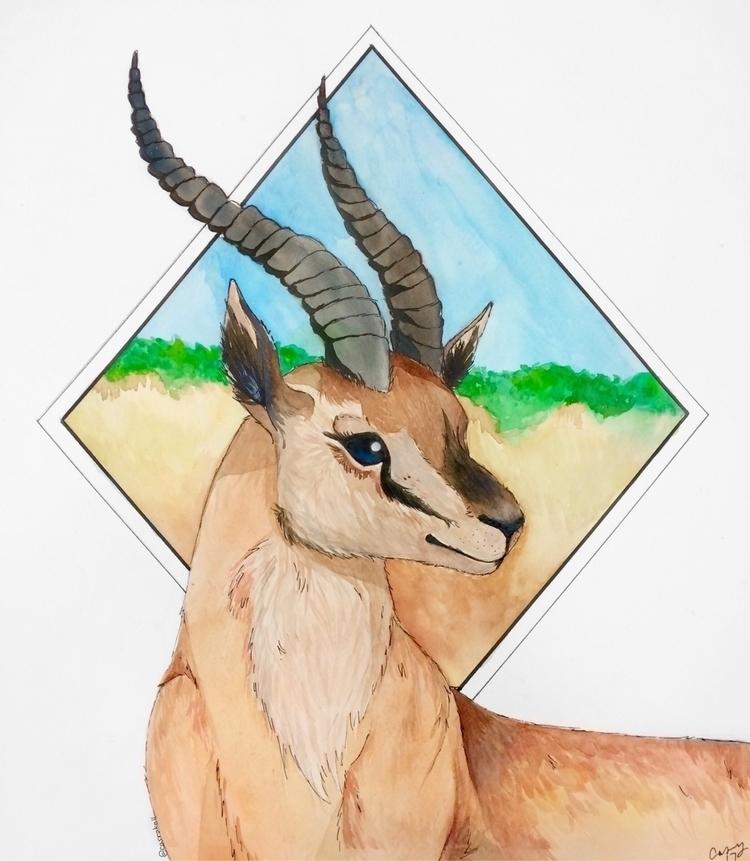 art, gazelle, watercolour - casrakell | ello