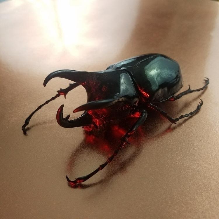 chalcosoma atlas - insects, beetles - newdeathdisco | ello