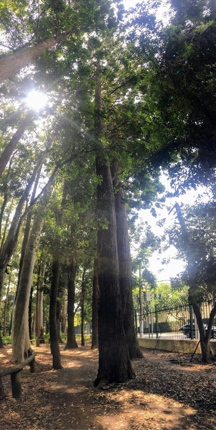 Eucaliptos australianos Parque  - antoniomg | ello