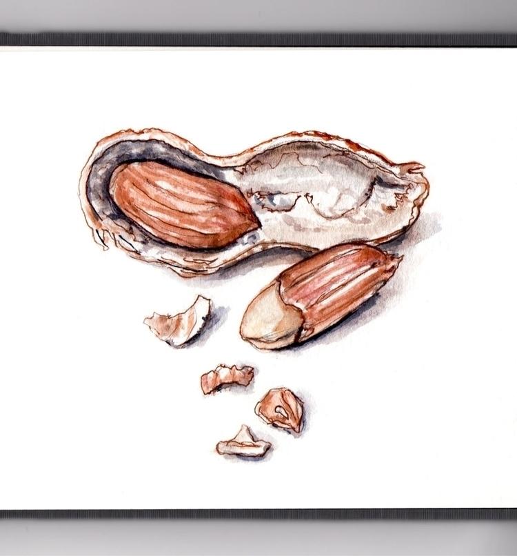 Nuts - watercolor, watercolour, illustration - doodlewash   ello