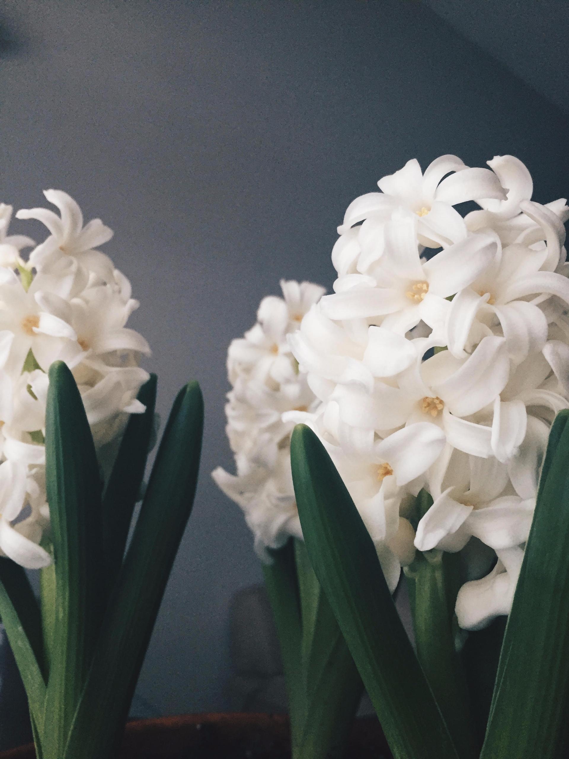 Flowers   Spring 2015 - flowers - toriamia   ello