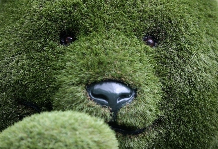 artificial grass teddy Chelsea  - nagnagnag | ello