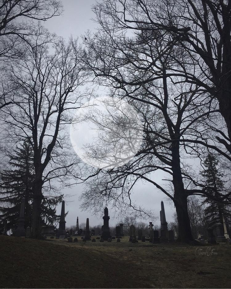 Art Terri Foss ➳➵➳➵➳➵➳➵➳➵➳➵ - terrifoss - terrifoss | ello