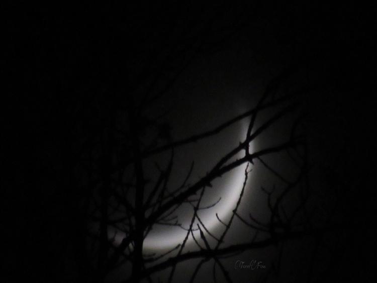 Witching Hour Art Terri Foss ➳➵ - terrifoss | ello