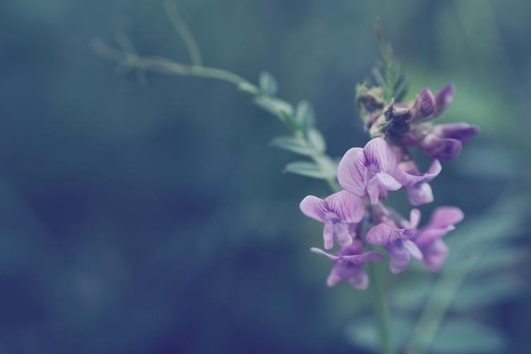Mambo Plurabelle - photography, nature - marcushammerschmitt | ello
