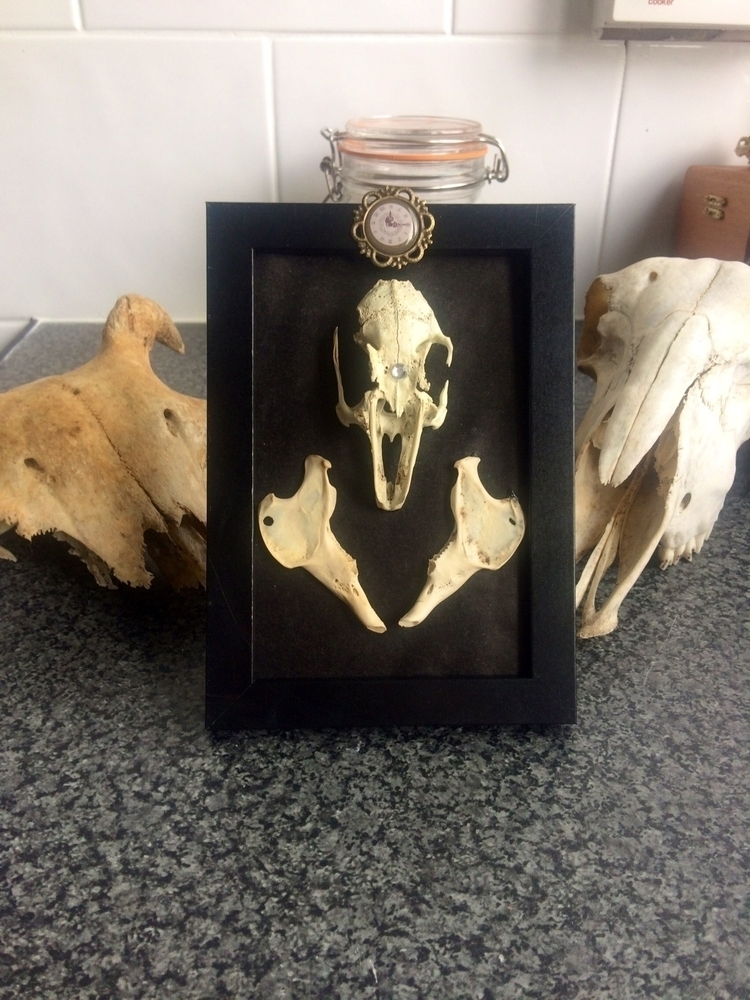 piece today, rabbit skull jaw b - life-after-mourning | ello