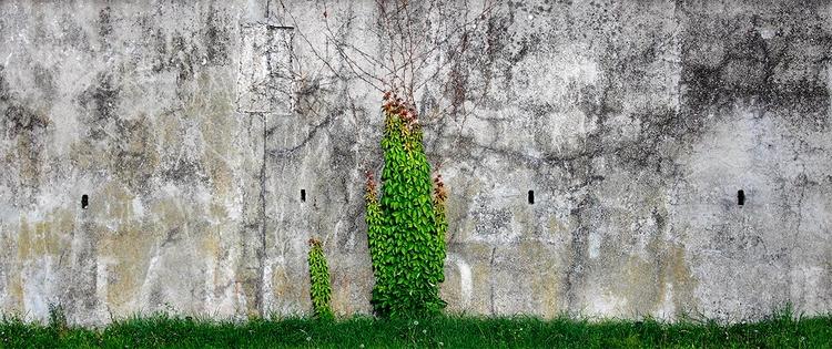 foglie di muro - roberto_zanni_fotografo | ello