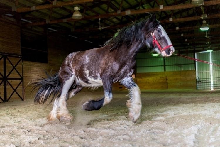 Longeing beast - horsepower, photography - purplesulfurstudio   ello