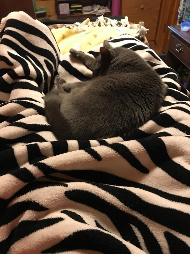 Friday night - cat, kitty, cozynight - jenniferscraftdesign   ello