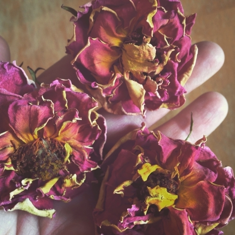 love roses dried! pretty - a_witchs_path | ello