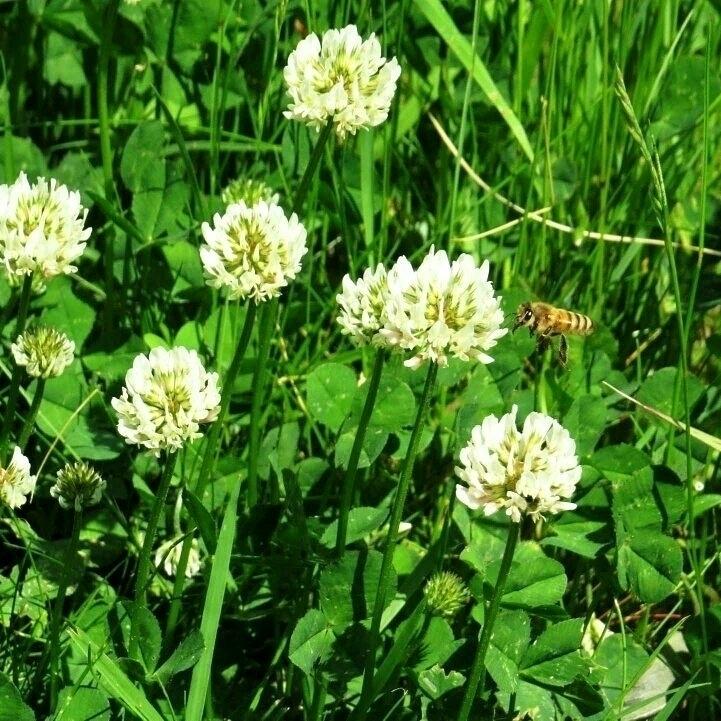 summer spent clover! originally - thesupercargo | ello