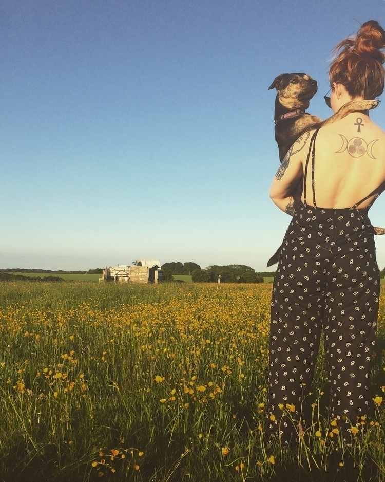 summer, meadow, dog, mutt, paisley - diamondsandrust | ello