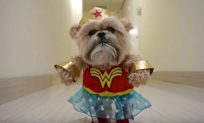 dogs love Woman! CNET article - bonniegrrl | ello