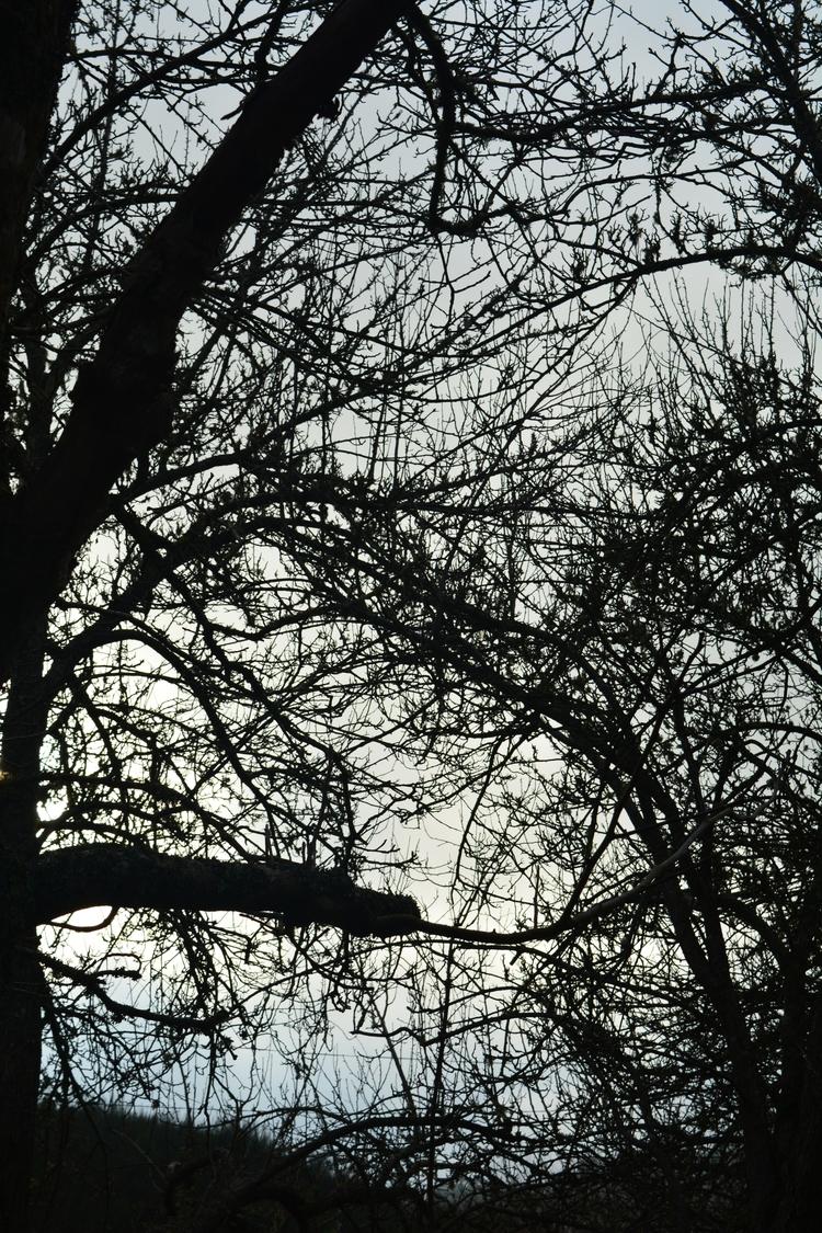 Trees Madeira - euric | ello