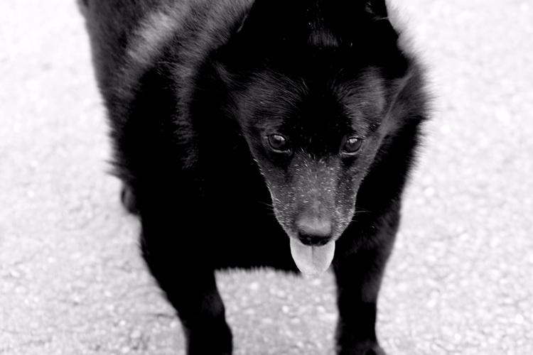Dog Walk Photographer: Tiffany  - tmphotographybaltimoree | ello