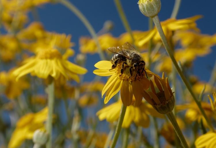 bee tasty stuff - flowers, nature - cm1ele | ello
